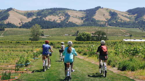 Cylists pedal down grassy paths of a vineyard.