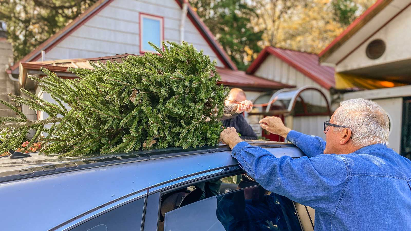 Two men tie a fir tree to the roof of a car.