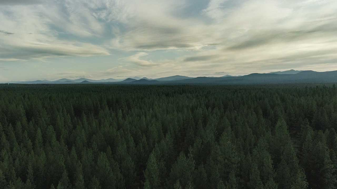 A bird's-eye view shows trees far into the horizon to a line of mountain peaks.