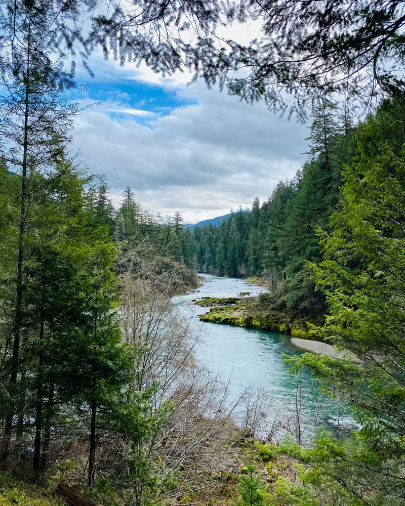A view of the Umpqua River in winter shows green trees and blue skies.
