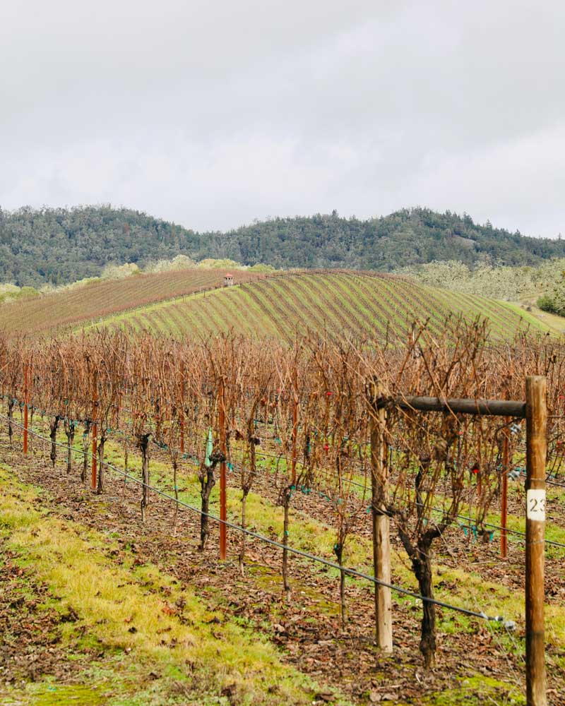 The vines at Abacela might be bare in the winter, but they're still stunning.
