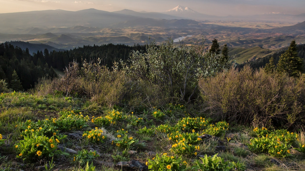 View of mountains and wildflowers at Cascades Siskiyou National Monument