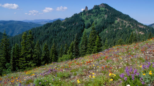 Colorful flowers seen amongst mountains and blue skies