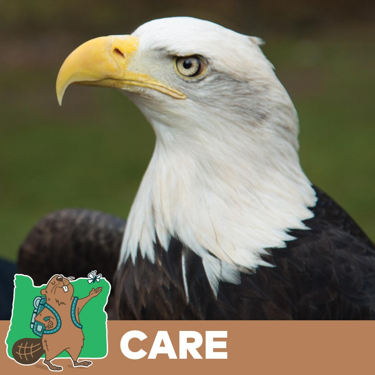 Head of bald eagle for Take Care Out There campaign