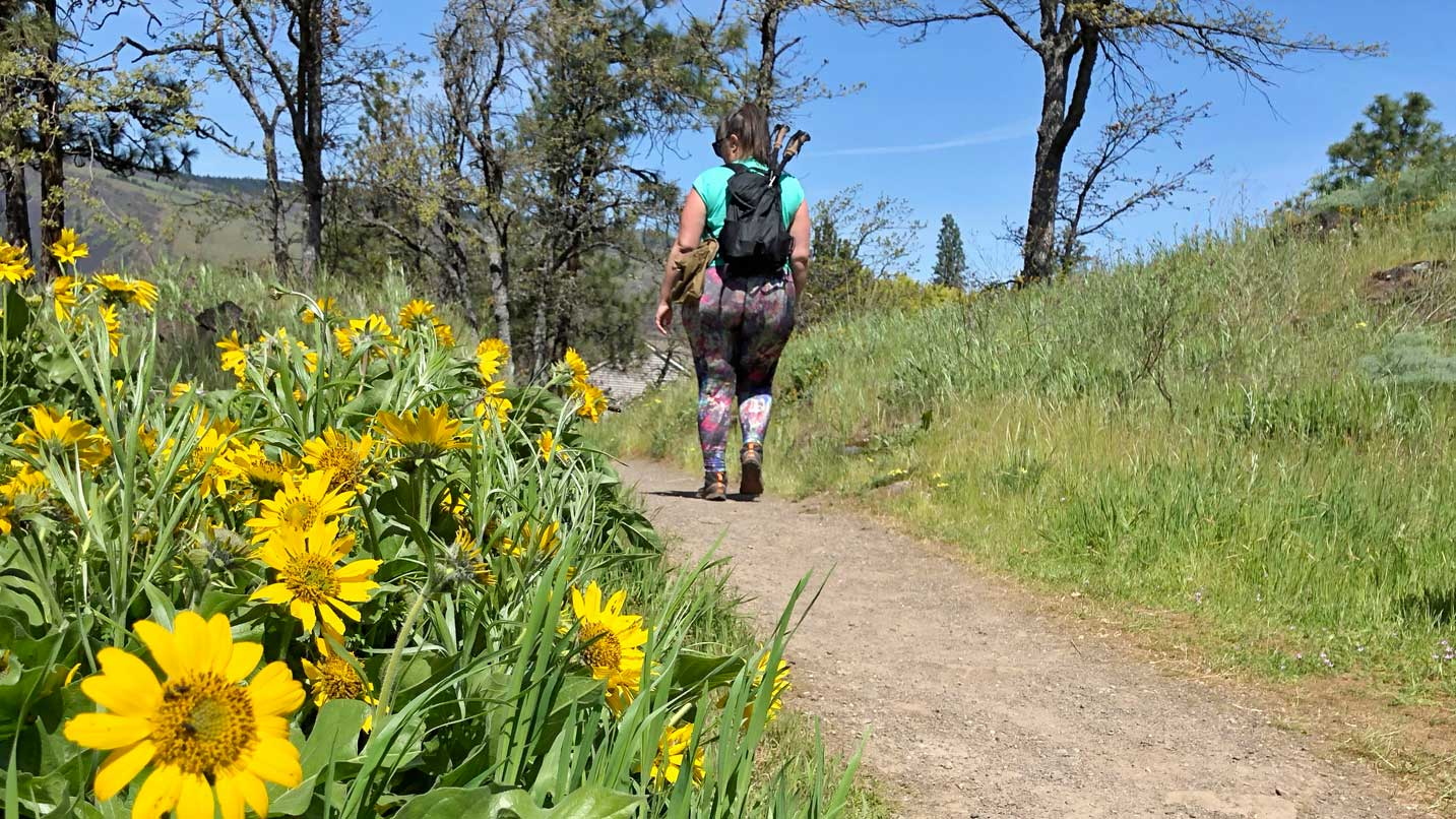 A hiker walks down a path surrounded by wildflowers.