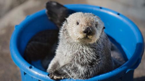 See your favorite creatures virtually at Oregon Coast Aquarium in Newport. (Photo by Oregon Coast Aquarium)