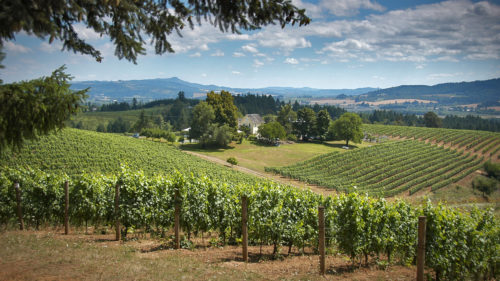 Sip a flight at David Hill's farmhouse vineyard or take a self-guided hike with help from their downloadable app. (Photo by Paul Loofburrow)