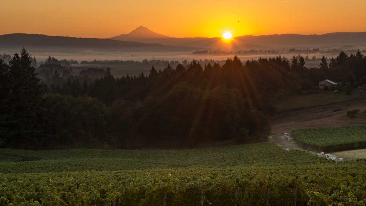Sunrise illuminates a valley and vineyard.