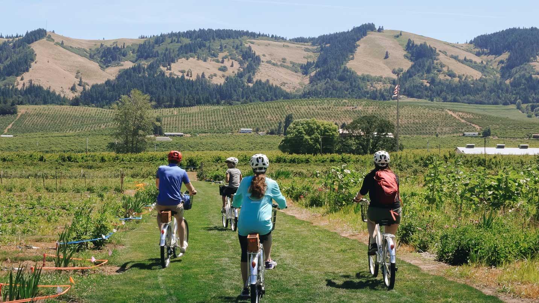 Cyclists pedal down a vineyard.