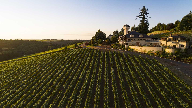 A bird's-eye view of the extensive estate vineyard of Willamette Valley Vineyards.