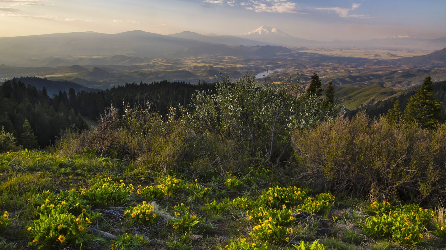 From a viewpoint in the national monument, wildflowers pop up and a snow-capped peak appears in the distance.