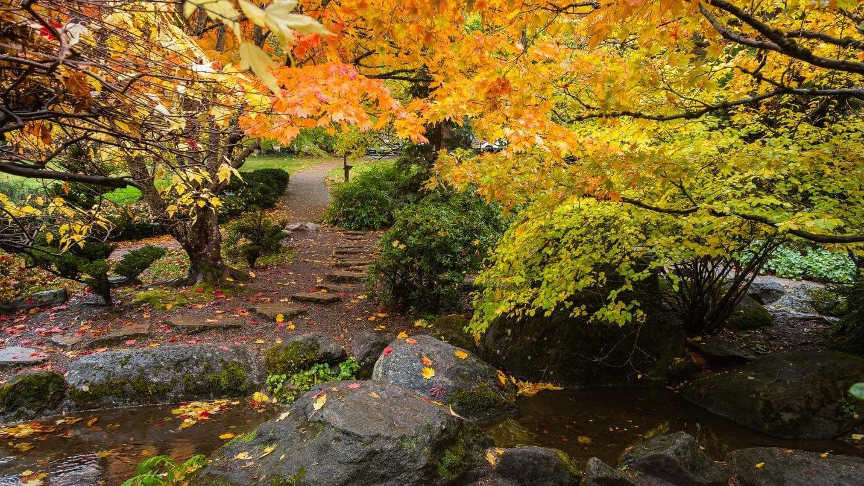 Fall leaves in Lithia Park