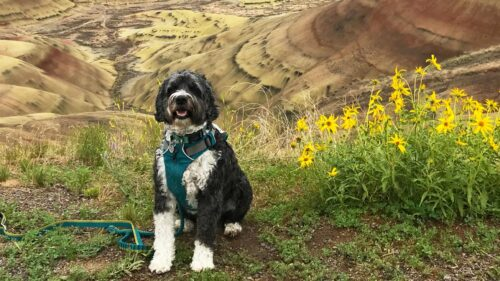 Dog in Painted Hills