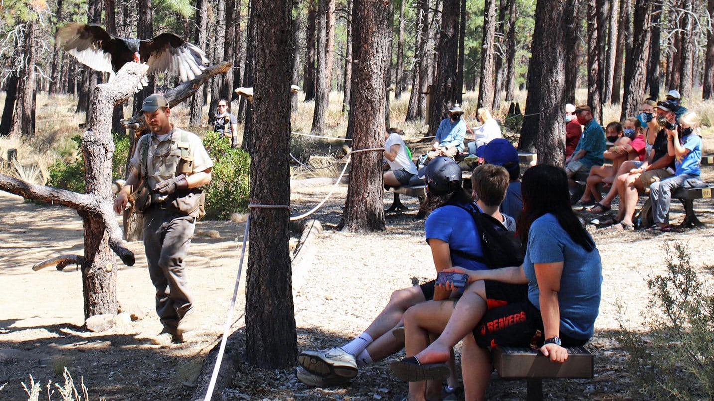 Masked visitors sit spaced apart as they watch an eagle demonstration.