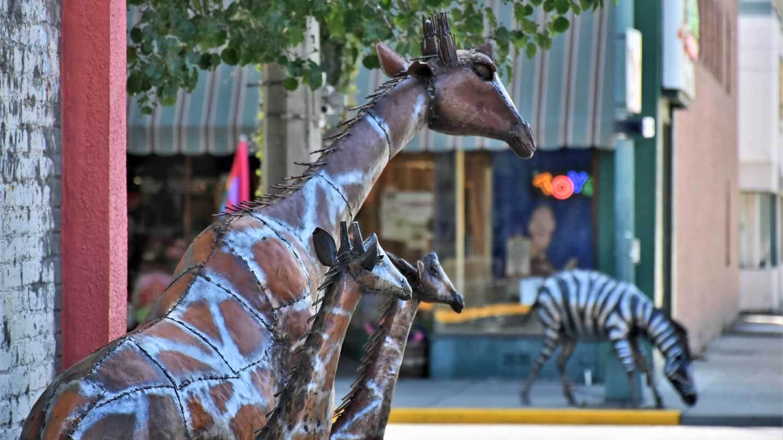 A giraffe statue is across the street from a zebra one.