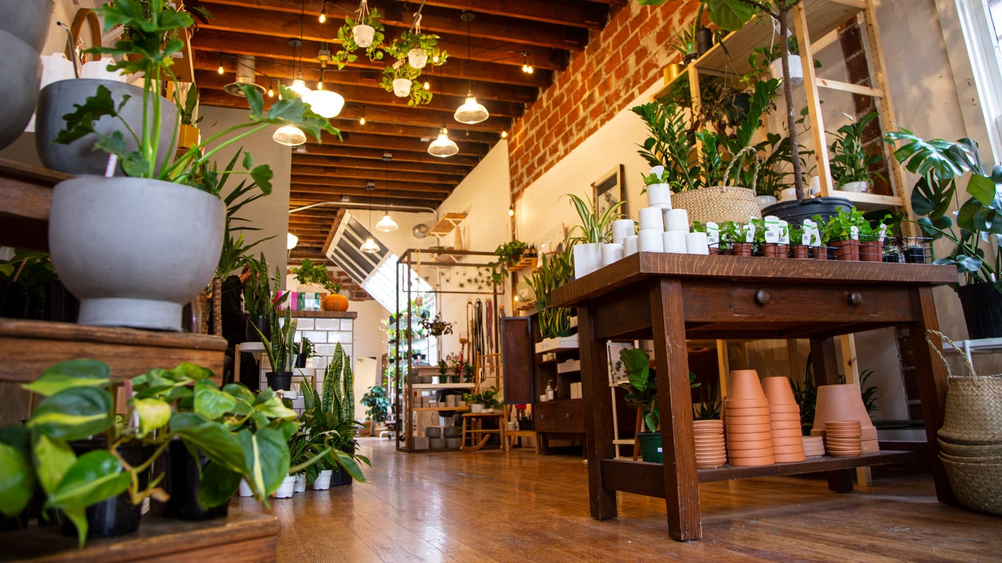 A variety of plants are situated on a store's wooden tables.