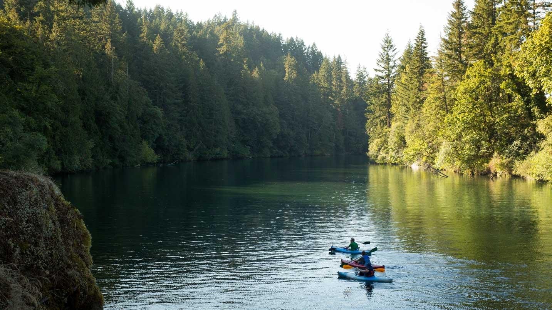 Kayakers paddle down the glassy Clackamas River.