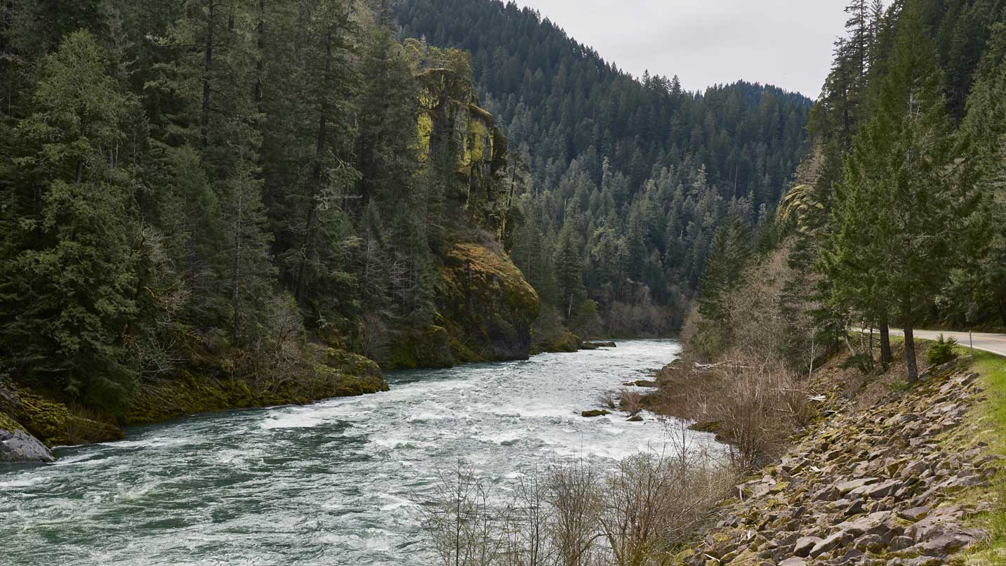 A road skirts the Umpqua River amid a forest canopy.