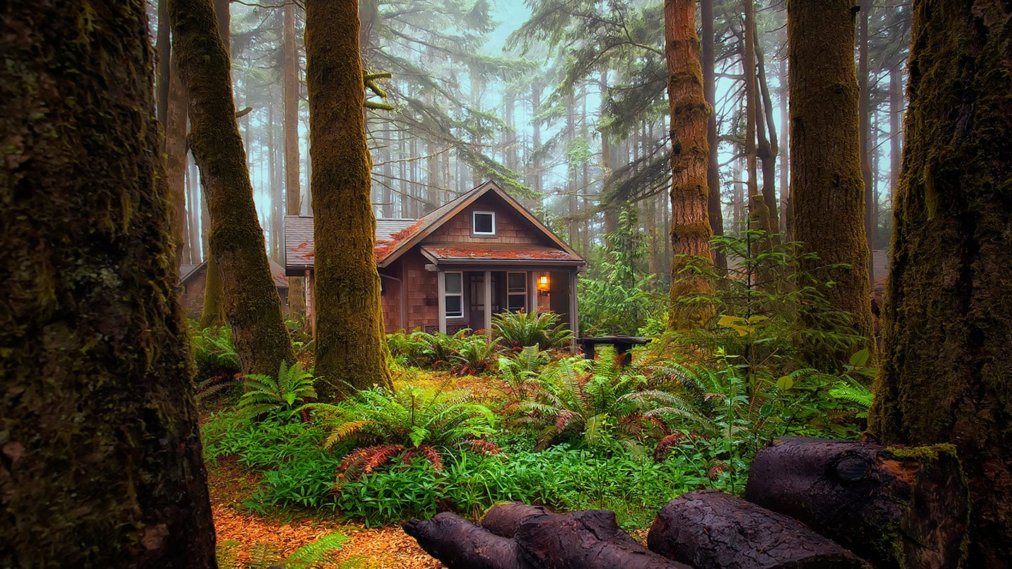 A single cabin sits behind ferns and trees.