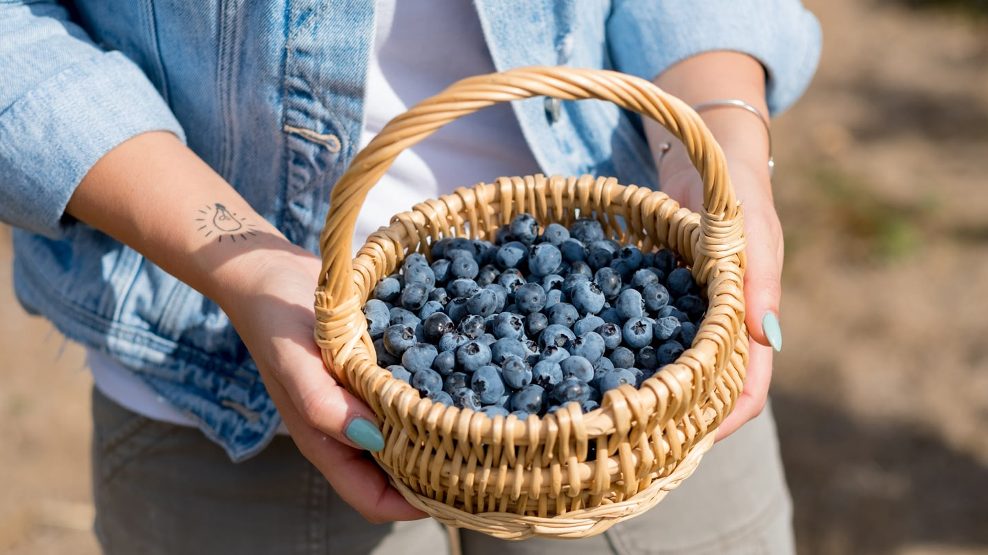 Two hands hold a wicker basket of blueberries.