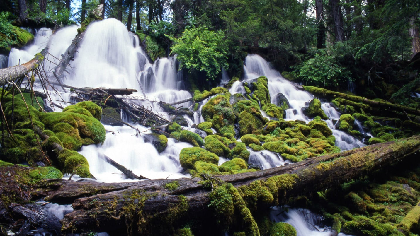 A waterfall rushes under moss and a large log.