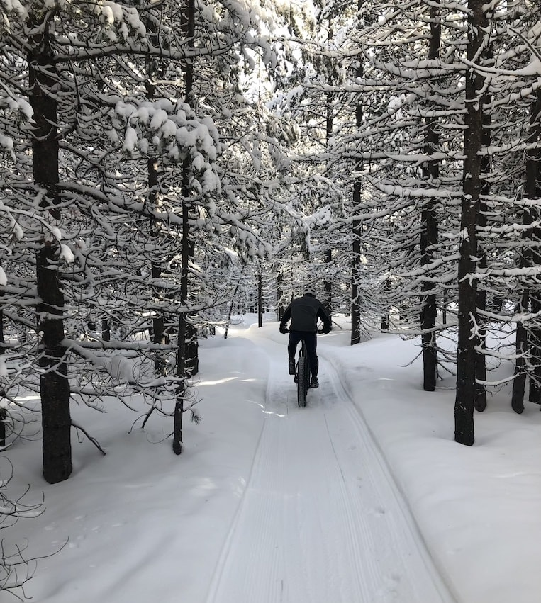 A fat-biker pedals down a snow-packed trail between trees.