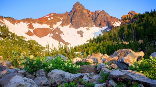 Wildflowers at the base of a partially snowy mountain