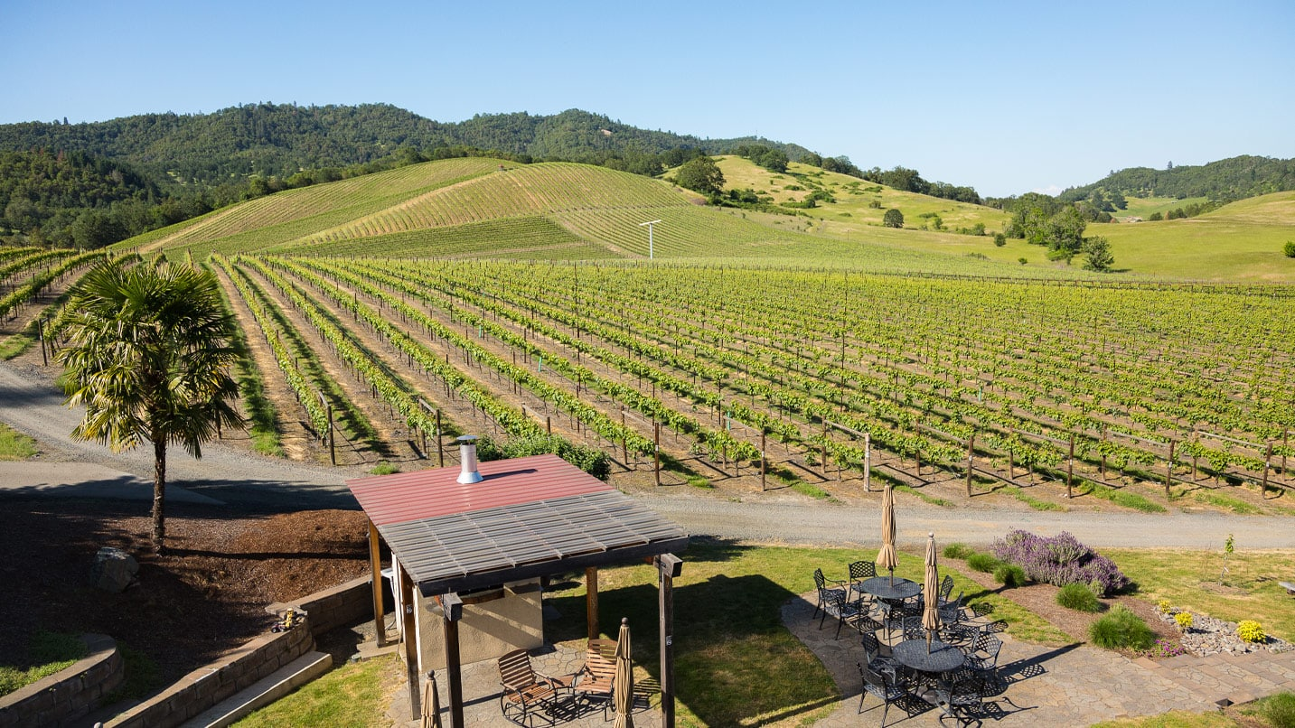 A table overlooks rolling hills of a vineyard's grape rows.