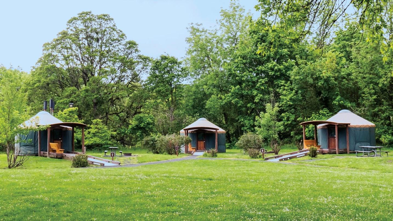 Three yurts at the edge of a grassy field