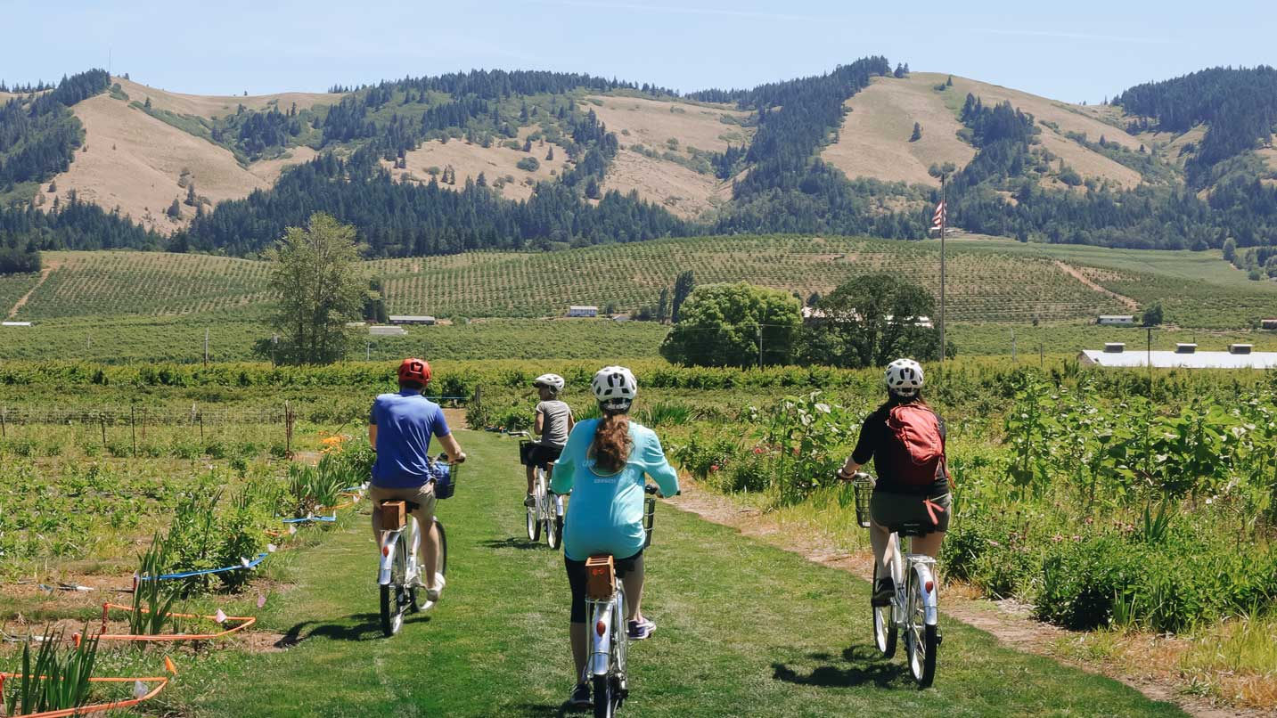 Four cyclists pedal down a path in a vineyard.