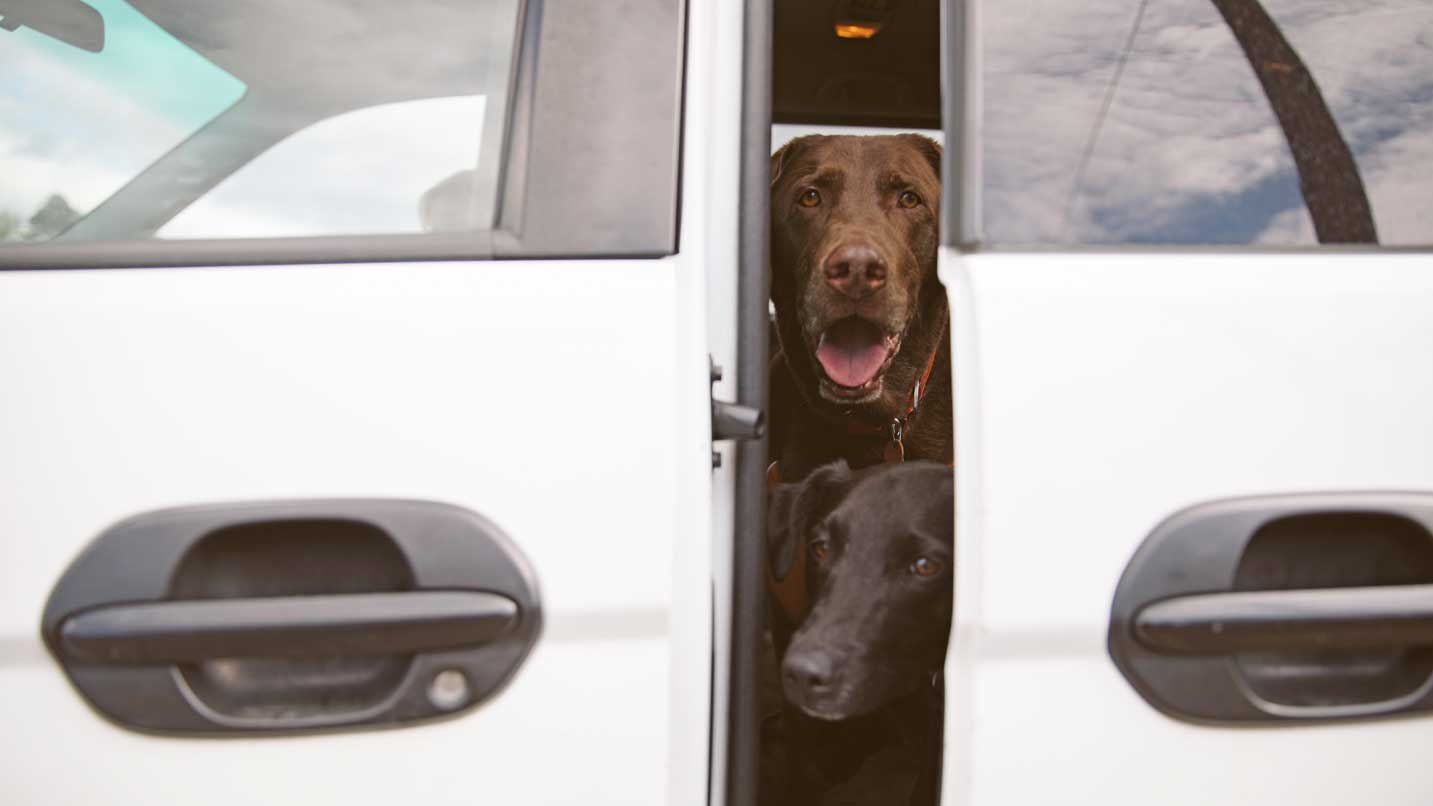 Two dogs look out a partly opened car door.