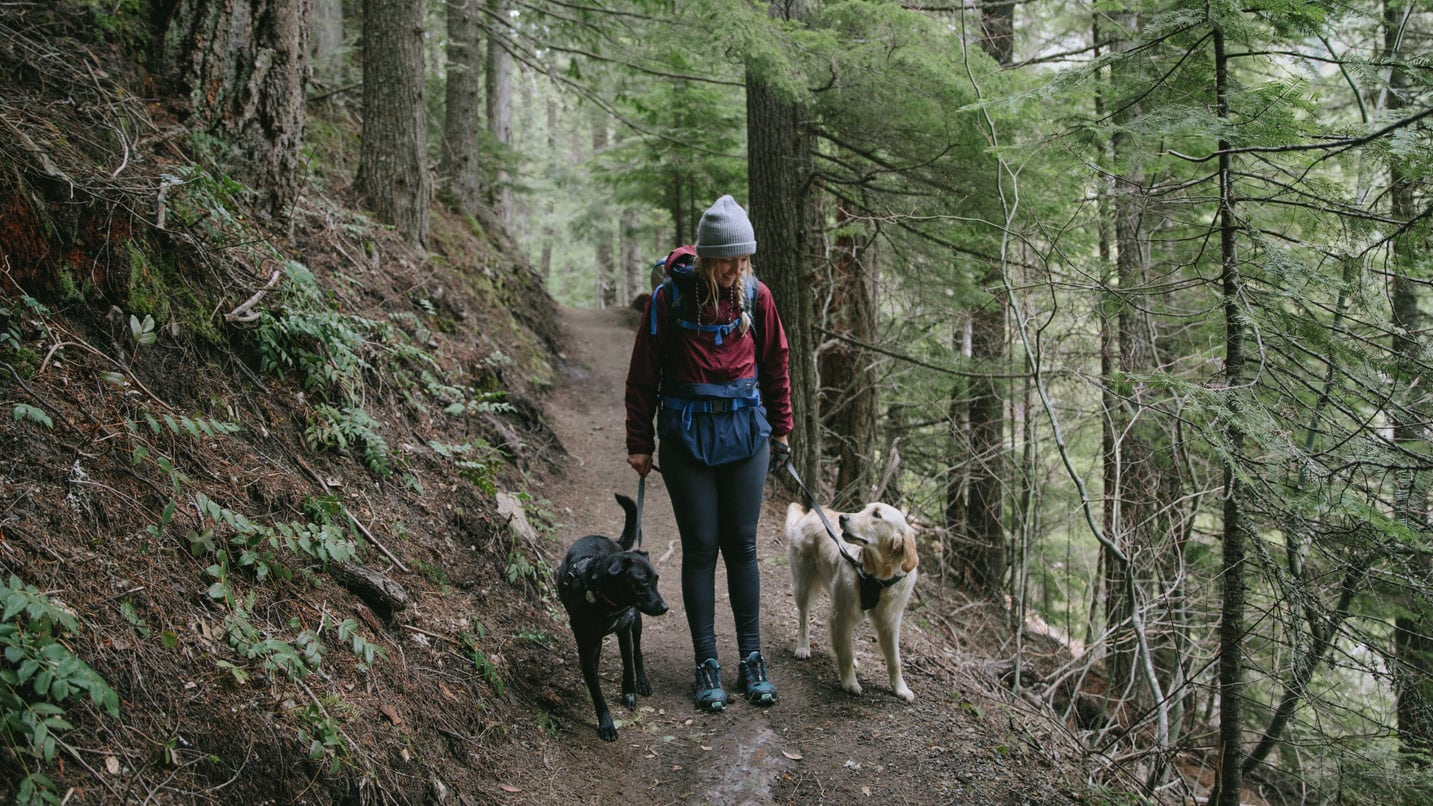 A hiker walks with a dog leashed on either side.