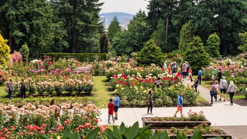 Sweeping view of a rose garden with people walking paved paths