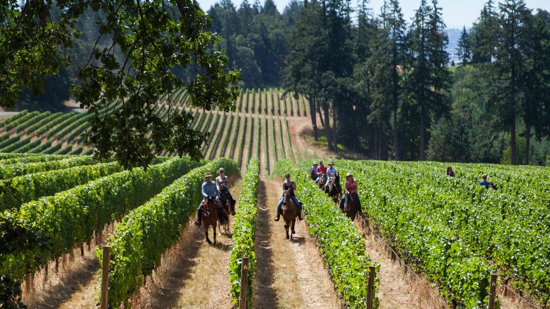 Horseback riders ride between vineyard rows