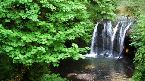 A short waterfall in a dense forest