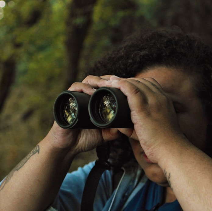 A person looking at birds with binoculars