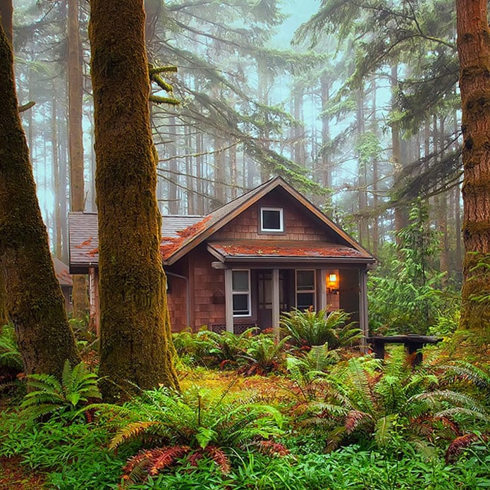 cottage nested in old growth forest and ferns.