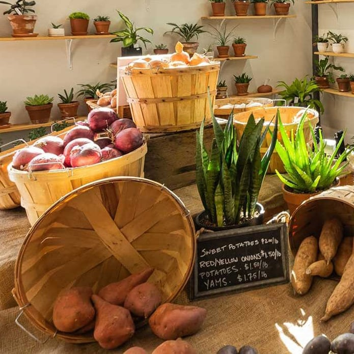 Potted plants, yams, potatoes and onions on display in market.