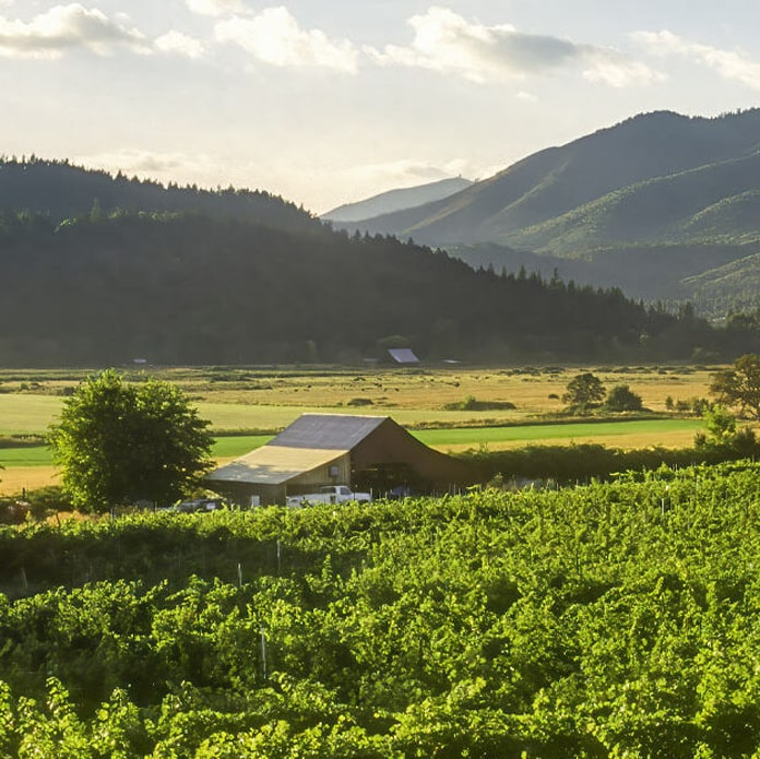 Vista of vineyard with mountains and farm in background