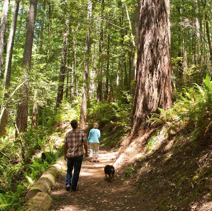 A couple hiking alongside redwood trees